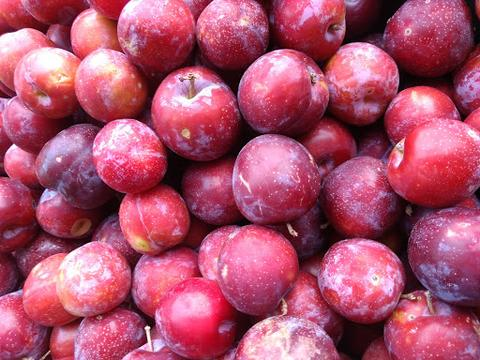 Ingredient Spotlight: Wild Plums