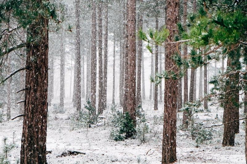 There's a Whole Winter Wonderland to Enjoy